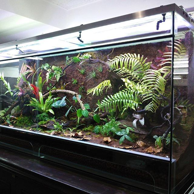 【cotup】さんのInstagramをピンしています。 《レプタケース1800x600x800PRO  b-box aquarium様  #ビーボックス #B-BOX #コットアップ #パルダリウム #ビバリウム #ケージ #ガラス #ヤドクガエル #レイアウト水槽 #植物園 #水族館 #オーダーメイド #爬虫類 #ガラスケージ #レプタケース #アグラオネマ #インテリア #熱帯植物 #テラリウム #水槽レイアウト #水草 #水草レイアウト #多肉植物 #bizarreplants》