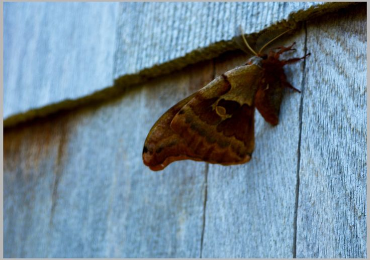 Beautiful moth in Red Point, Cape Breton Island, July 2nd, 2014.