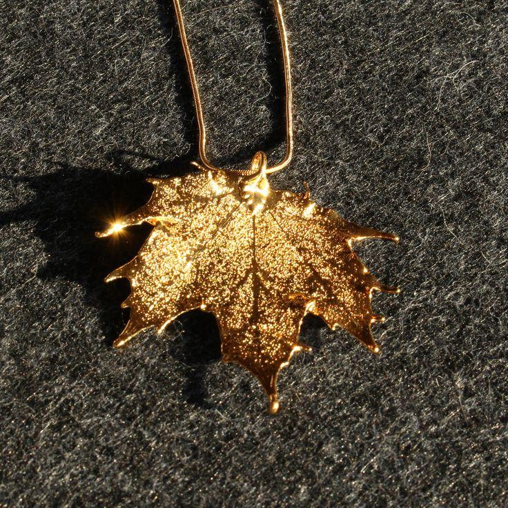 Ein vergoldetes Blatt eines Kanadischen Ahorns im Licht der Abendsonne.