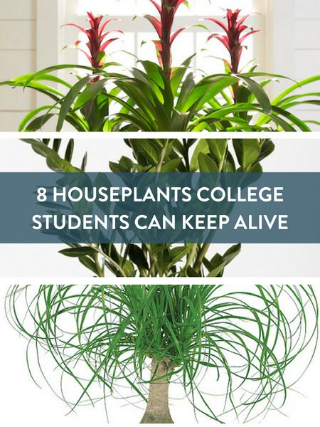 8 dorm room plants Pinterest image