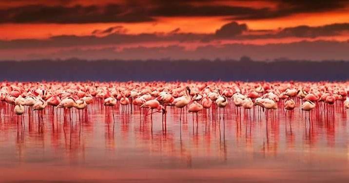 El lago Manyara localizado en la rama Natran-Manyara-Balangida del Rift de Africa Oriental en la región de Arusha del norte de Tanzania. Tiene una gran diversidad de paisajes y en sus orillas habitan búfalos elefantes leones leopardos rinocerontes y un gran numero de aves entre ellas el señorial flamenco. En el lago se estableció en 1960 el Parque Nacional del Lago Manyara y en 1981 fue declarada Reserva de la Biosfera.