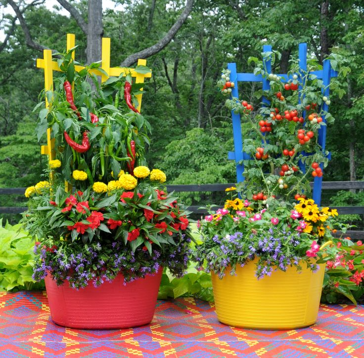49 best images about herbs veggies in container gardens on pinterest cherries window boxes - Potted gardentricks beautiful flowers ...