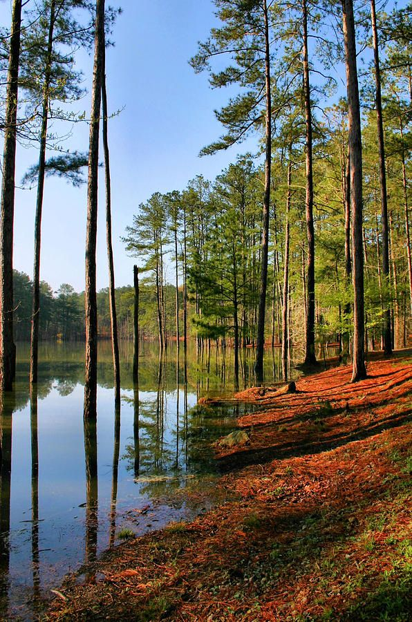 ✮ Allatoona Lake at the top of Red Top Mountain in Georgia: Red Tops, Lakes Allatoona, Georgia Lakes, Tops Mountain, Georgia Usa, Georgia America, Georgia Camps, Usa Beautiful Places, Allatoona Lakes