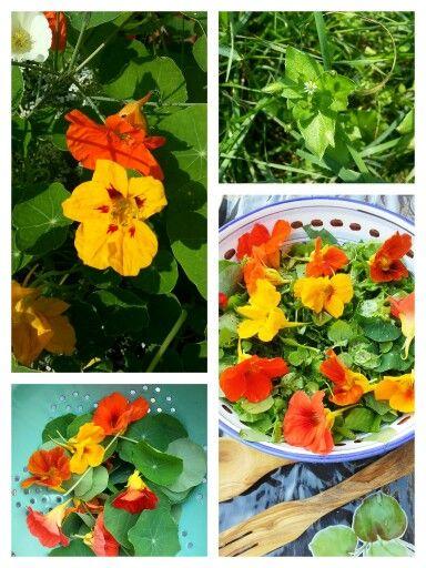SALADE VAN VOGELMUUR EN OOST-INDISCHE KERS Ingrediënten: - veel blaadjes van vogelmuur (bloemtopjes mogen ook) - jonge bladeren en bloemen van Oost-Indische kers - komkommer - dressing naar keuze