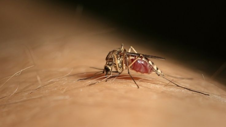 Can Dogs Contract West Nile Virus