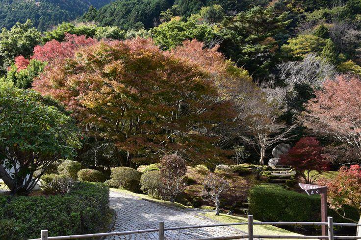 昭和の森会館 2015.11