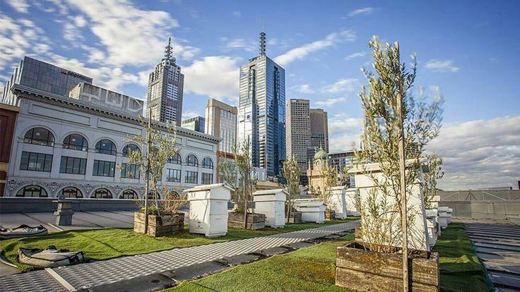 The secret life of Melbourne's bess