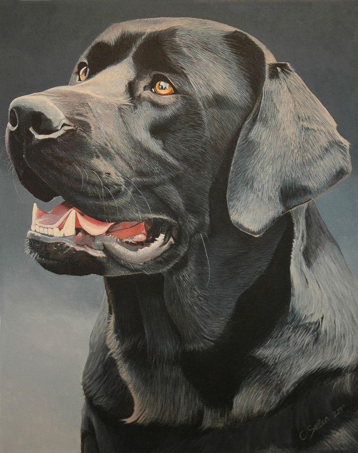 black-labrador.jpg (1414×1792)