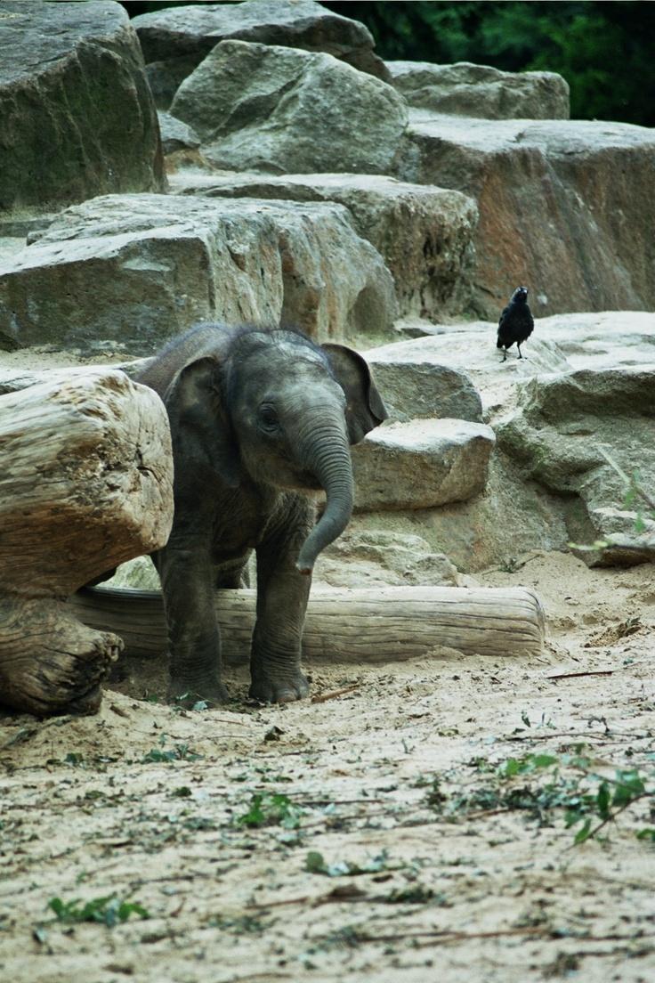 letsongmon - olifant dierenpark Emmen