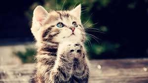 Billedresultat for cute cat