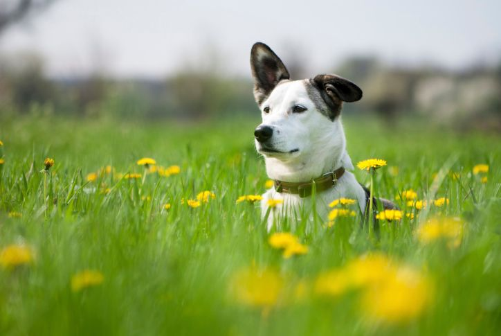 3 Natural Remedies for Dogs: Coconut Oil, Canned Pumpkin, Diatomaceous Earth