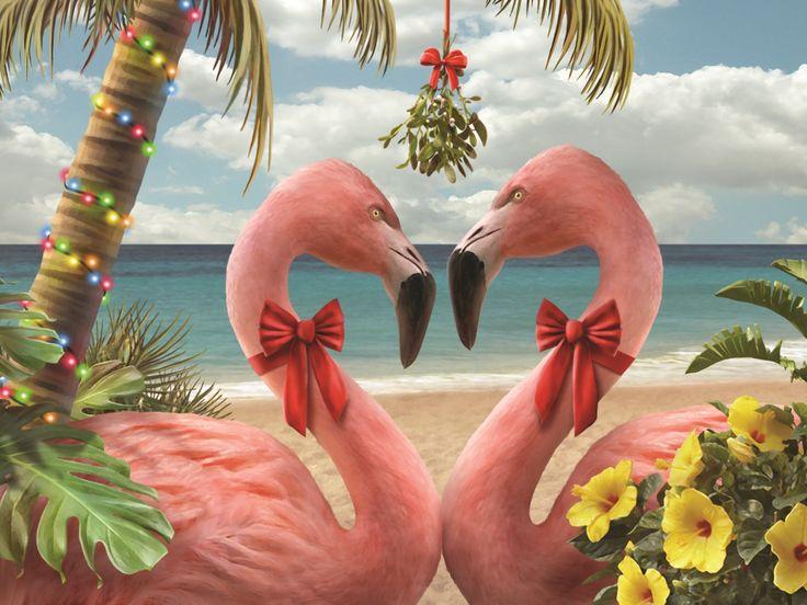 Tropical Christmas A Tropical Christmas And Holiday