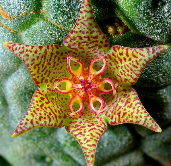 The Cloud Forests Of Ecuador Are Home To This Rare Beautiful Flower Called Monkey
