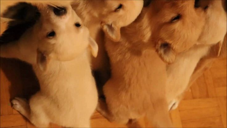 Funny & adorable Puppy Video - Feeding time
