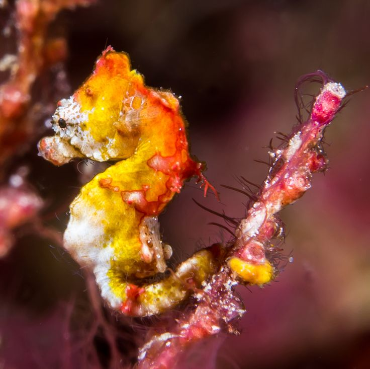 17 best images about animals i fish on pinterest for Is a seahorse a fish