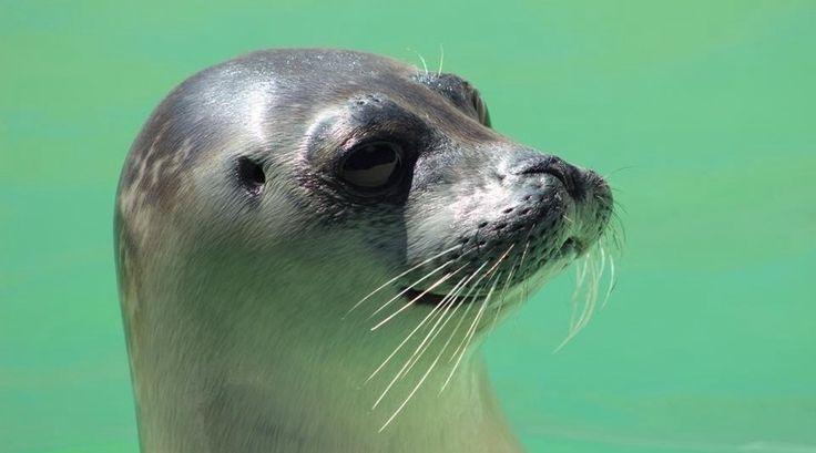 Ach... Wat schattig! Een zeehondje uit Ecomare.