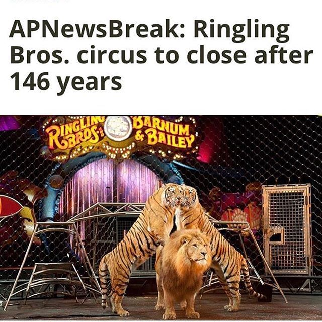The Ringling Brothers circus just announced that they will close their doors forever come May 2017. No longer will incredibly amazing creatures, all unique to their own design and being, be forced to act in such mundane shows. No longer will these innocent creatures be whipped into submission, cramped in filthy cages, and pressured into unnatural tendencies. Thank you, Ringling, for finally realizing the monstrosity of treating animals in such a way, and changing your ways. It may have been…