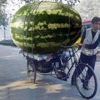 Giant Melon