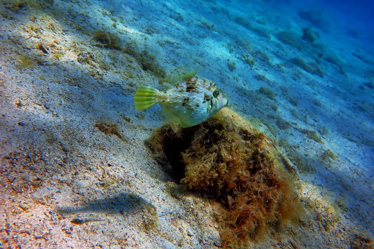 Aquatic Life @ 1st Cove - Vouliagmeni - Greece - Sea Breaze