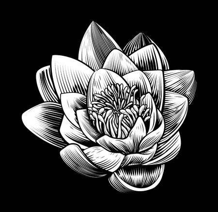 Stock Vector Tattoo Ideas Water Lilies Vintage Flowers Vintage