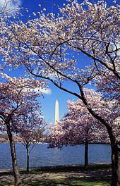 The National Cherry Blossom Festival (Japanese: 全米桜祭り) is a spring celebration in Washington, D.C., commemorating the March 27, 1912, gift of Japanese cherry trees from Mayor Yukio Ozaki of Tokyo City to the city of Washington. Mayor Ozaki donated the trees in an effort to enhance the growing friendship between the United States and Japan and also celebrate the continued close relationship between the two nations.[1]