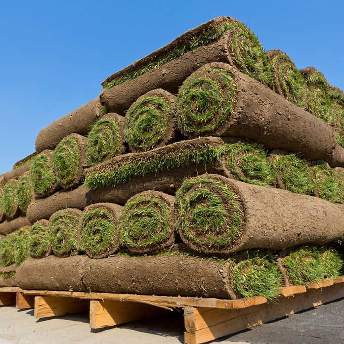 Western Canada Kentucky Bluegrass Turf Sod with Minimum Order of 400 sq. ft.  COSTCO order online