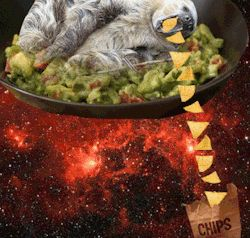 Sloth Puns Animals Giff #561 - Funny Sloth Giffs  Funny Giffs  Sloth Giffs