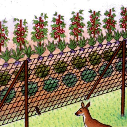 37 Best Deer Fence Images On Pinterest Deer Fence