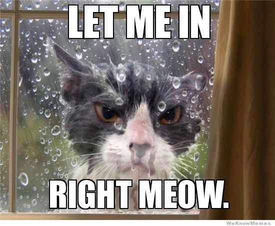 Funny Meme Rain : Let me in right meow memes pinterest to find out