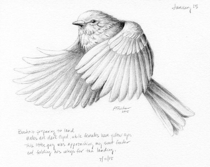 Bird Pencil Drawing Print Grey Bird Picture Chaffinch Sketch Woodland Wall Decor Natural Home Print Minimalist Art Print British Bird