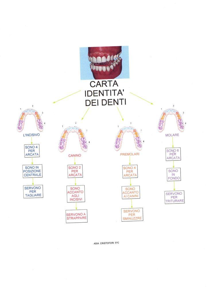 Mappa scienze: Carta Identità dei denti