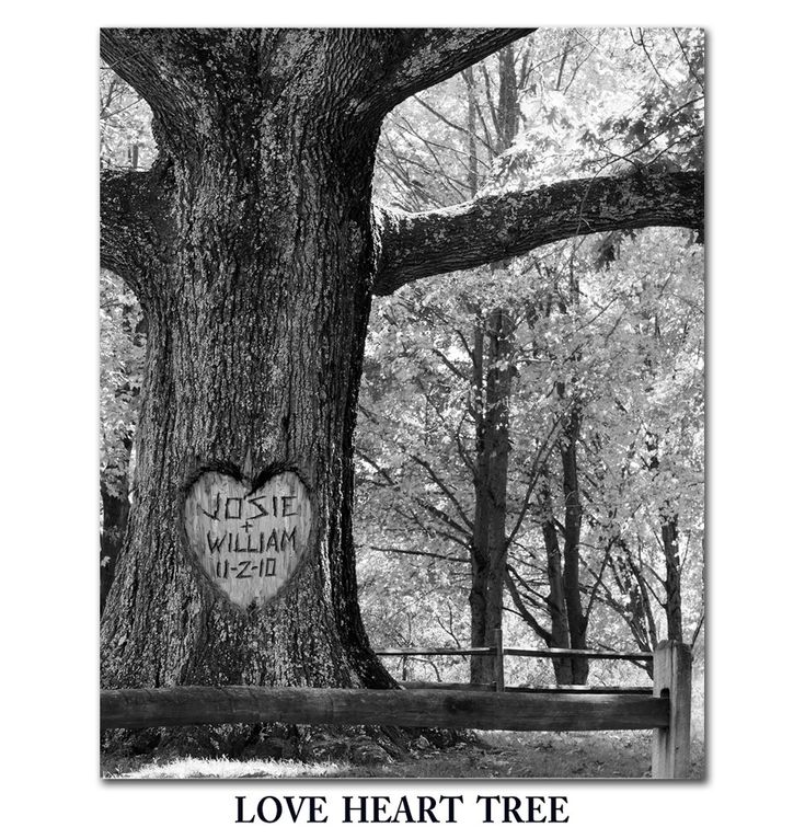 cool thing to do someday.: Photo Personalized, Trees Photo, Anniversaries Ideas, Trees 8X10, Ceremony Ideas, Names Carvings On Trees, Letters Photography, Heart Trees, Photography Ideas