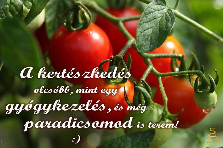 #kertészkedés #kertészet #zöldség #gyümölcs #kert #egészség