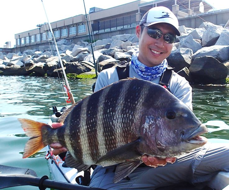 17 best images about kayak fishing on pinterest surf for Sheepshead fishing rigs