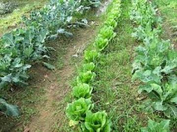 Βιολογικό περιβόλι με συγκαλλιέργειες λαχανικών