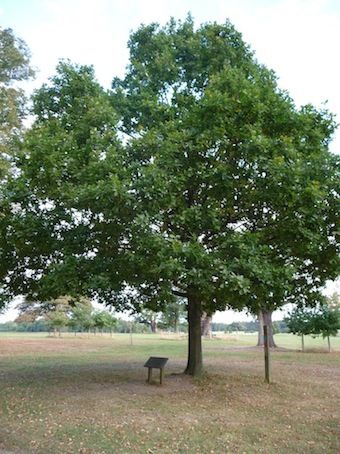 """In the park, an oak tree marks the place where Elizabeth first heard of her accession to the throne on November 17th 1558. This is a wonderful spot to just sit and ponder those famous words, """"This is the Lord's doing, and it is marvelous in our eyes."""""""