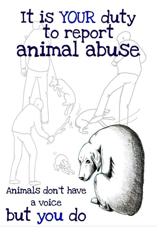 Cowardly humans: I don't get why so many people are afraid to report animal abuse. It can be done anonymously so there is nothing to fear!!
