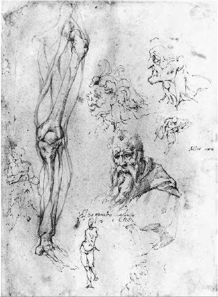 Michelangelo Buonarroti - Studio anatomico di una gamba destra e studi vari