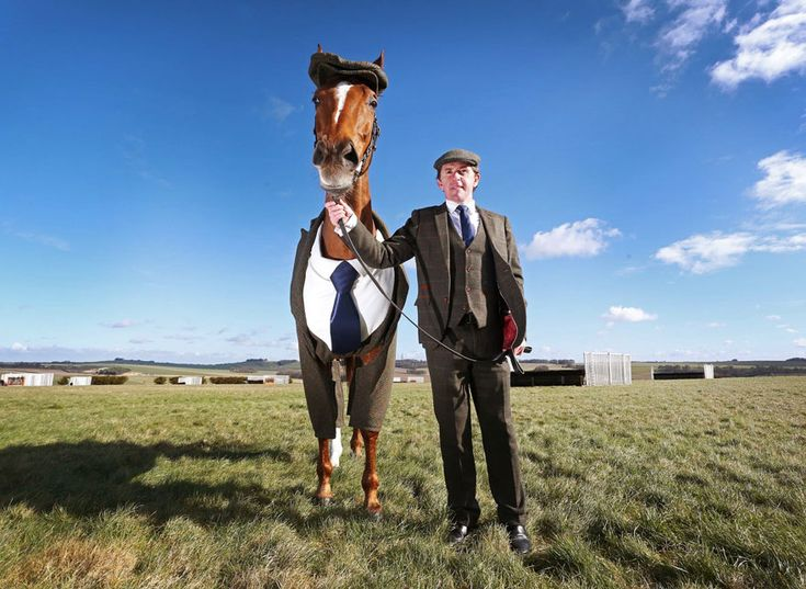 Horse Gets Tailored Three-Piece Suit, Looks Absolutely Dashing   Bored Panda