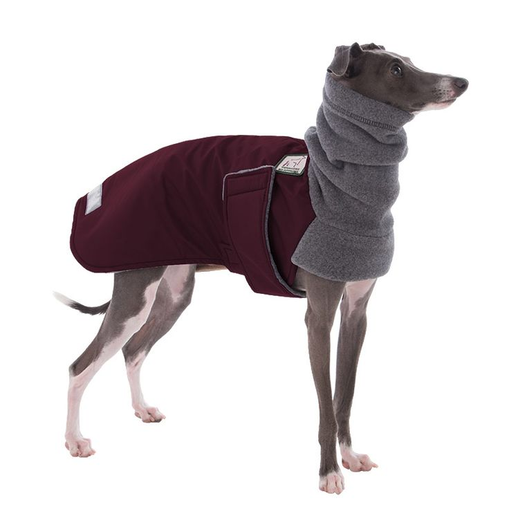 46 besten Italian Greyhound Dog Apparel Bilder auf Pinterest | Hunde ...