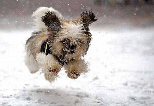 "After all this heat, our pups will prob do the same-""snow! snow! snow!"""