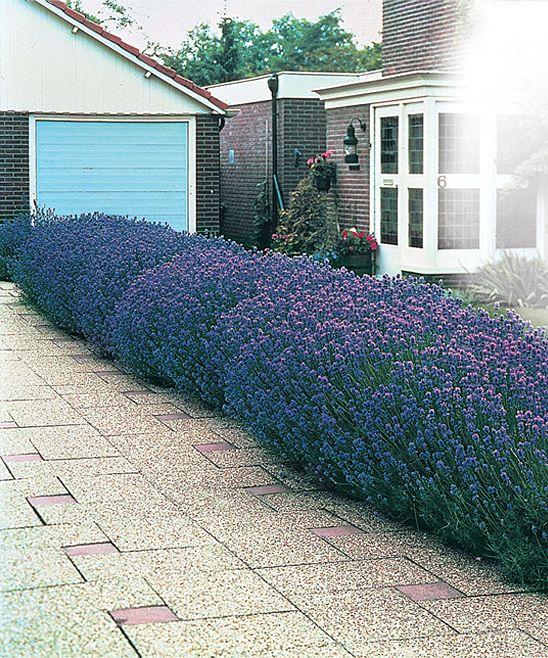 images about Garden border ideas on Pinterest