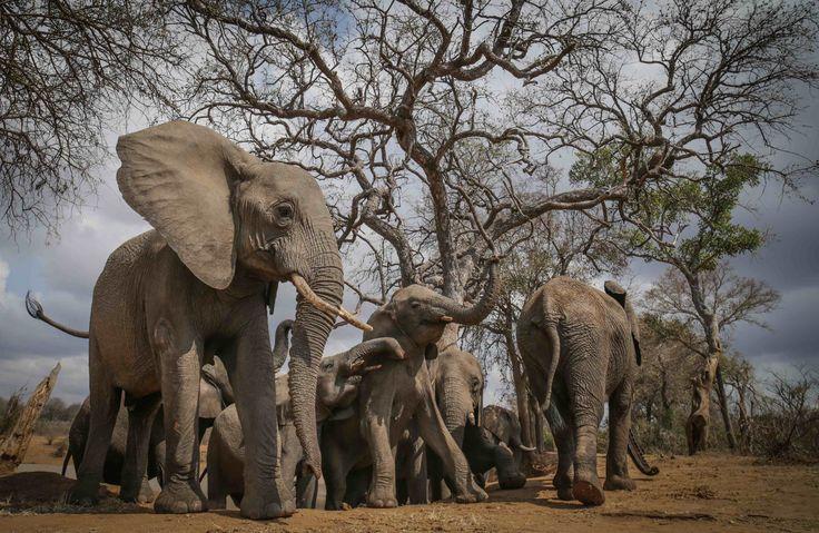 Most amazing photo's of the herd of elephants at Camp Jabulani Photo credit Black Bean Productions