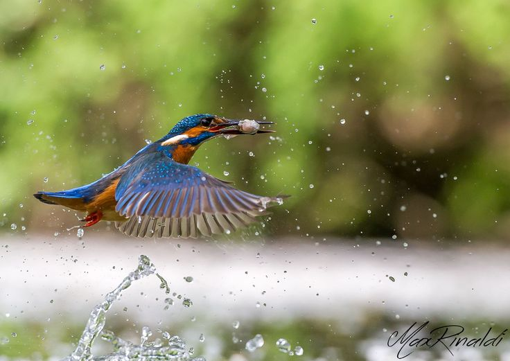 """""""Come fly with me"""" by Max Rinaldi on 500px"""