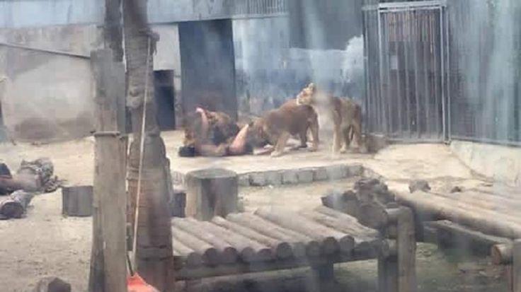 El joven que este sábado se lanzó a la jaula de los leones en el Zoológico Metropolitano de Santiago deChiledejó una carta en la quese describía como un 'profeta' protegido por