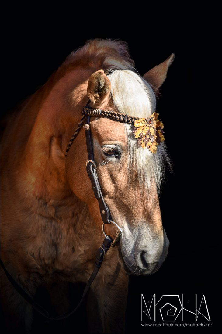 Oak Leaf bridle ornament - Copyright (c)Moha by Moha-jewelry on DeviantArt