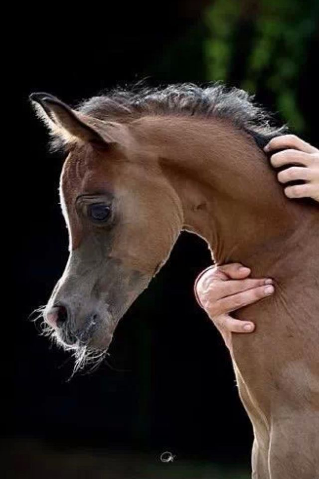 I am suddenly and inexplicably struck by how much this young Arabian resembles a seahorse...