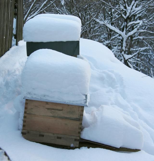 How Do Honey Bees Survive the Winter? My Local Bee Keeper drives his hives to the lower States to pollinate orchards.