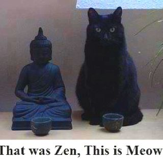 That was Zen - This is Meow