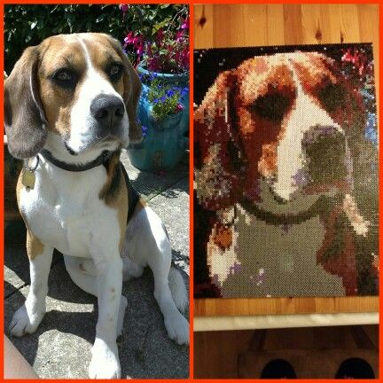 My dog in hama #dog #animal #pet #hama #perler #pearlbeads #creative #hobby #black #brown #beagle #christmasgift #tookalongtime